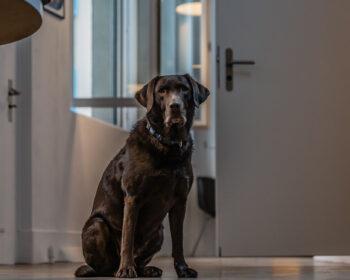 Tonstudio Audioflair Bern. Studiohund Ronja macht Buchhaltung und empfängt die Gäste.